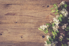 Wooden background with apple tree blossom branch, post card template Royalty Free Stock Photography
