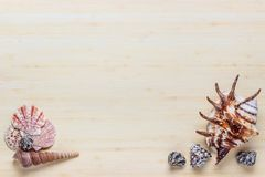 Wooden background with arranged shells. Holiday background with free space. stock photography