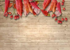 Wooden background with autumn leaves and red berries of mountain Stock Photos