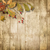 Wooden background with autumn leaves and rowan Royalty Free Stock Photo