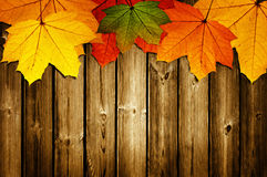 Wooden background with autumn Stock Image