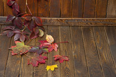 Wooden background with autumnal leaves Royalty Free Stock Photo