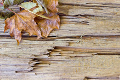 Wooden background. Beautiful wooden background with autumn leaves Royalty Free Stock Images