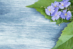 Wooden background with blue flowers Royalty Free Stock Images