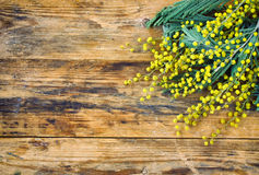 Wooden background with branches of mimosa Stock Photography