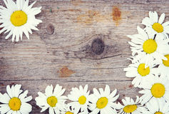 Wooden background with bright chamomile flowers Stock Image
