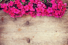 Wooden background with bright red phlox flowers on the top Royalty Free Stock Images