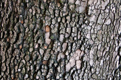 Wooden background. Wooden brown background - tree bark material Royalty Free Stock Image