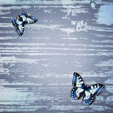 Wooden background with butterfly Stock Image