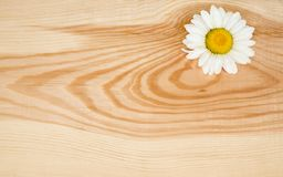 Wooden background with camomile Royalty Free Stock Photos