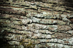 Wooden background with certain texture pattern Royalty Free Stock Photos