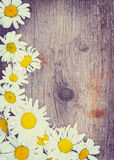 Wooden background with chamomile flowers in the corner Royalty Free Stock Photos