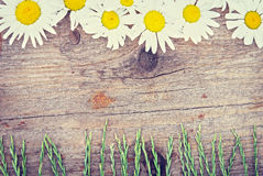 Wooden background with chamomile flowers and grass Stock Photo