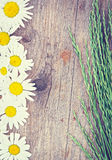 Wooden background with chamomile flowers and grass Stock Images