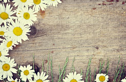 Wooden background with chamomile flowers Stock Photos