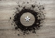 Wooden background concept earth piled circle dish texture landing center seeds as flower petals spring horizontal stock photography