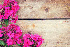 Wooden background with a corner made of pink phlox flowers Royalty Free Stock Photography