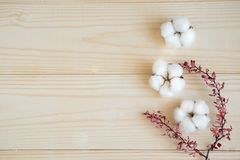 Wooden background with cotton flowers and natural dried leaves of the shrub. Background with natural cotton flowers and copy space royalty free stock images
