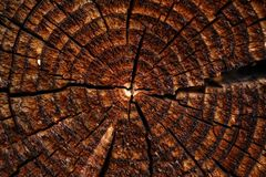 Wooden background with cracked growth rings Stock Photo