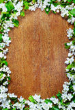 Wooden background with decorative frame of apple flowers Stock Image