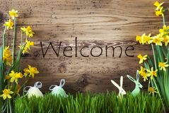 Easter Decoration, Gras, Text Welcome Stock Photo