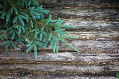 Wooden Background with Fir Tree Stock Photography