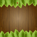 Wooden background with foliage Stock Photography