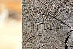Wooden background in the form of a cut of a log Stock Image