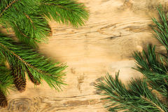 Wooden background with a frame of pine branches with cones Stock Images