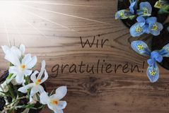 Sunny Crocus And Hyacinth, Wir Gratulieren Means Congratulations Royalty Free Stock Image