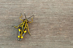 Wooden Background and Grasshopper Stock Photos