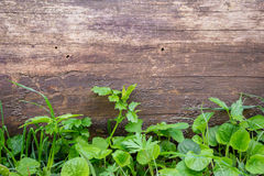 Wooden background with green grass Royalty Free Stock Photography