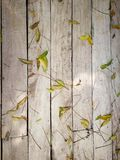 Wooden background with green leaf.  Royalty Free Stock Photo