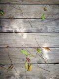 Wooden background with green leaf.  Stock Photos