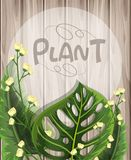 Wooden background with green leaves and white flowers. Illustration Royalty Free Stock Photo