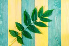 Wooden background with green plant Stock Photography