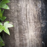 Wooden background and ivy Royalty Free Stock Photography