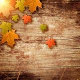 Wooden background with the leafs Stock Image