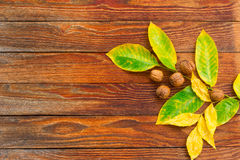Wooden background with leaves and nuts Royalty Free Stock Photography