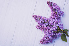 Wooden background with lilac flowers Stock Image