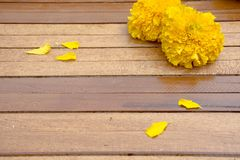 Wooden background with marigold. Wooden background with marigold in garden Royalty Free Stock Images