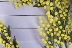 Wooden background with mimosa. Wooden  texture with mimosa useful as background for 8th of march Stock Images