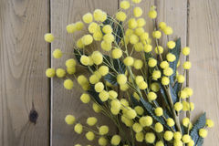 Wooden background with mimosa. Wooden  texture with mimosa useful as background for 8th of march Royalty Free Stock Image