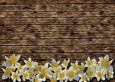 Wooden background with narcissuses Stock Photography