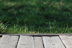 Wooden background nature Stock Photography