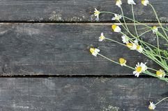 Wooden background. Old vintage table and meadow flowers of camomile. Royalty Free Stock Photo