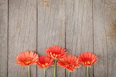 Wooden background with orange gerbera flowers Royalty Free Stock Photos