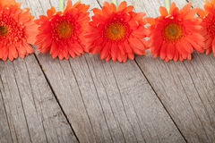 Wooden background with orange gerbera flowers Royalty Free Stock Images