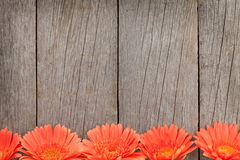 Wooden background with orange gerbera flowers Royalty Free Stock Photo