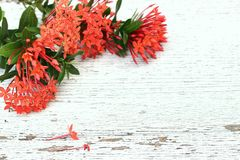 Wooden background. The red flower is on the wooden background Royalty Free Stock Photography